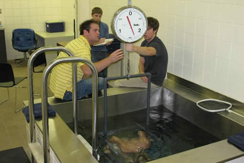 Hydrostatic Weighing